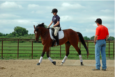 Equine boarding business plan