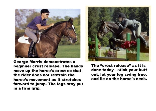 Horse Jumping Release  The Thinking Equestrian